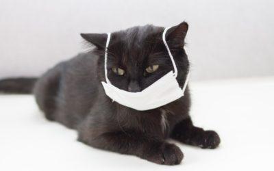 Informació gats i Covid-19