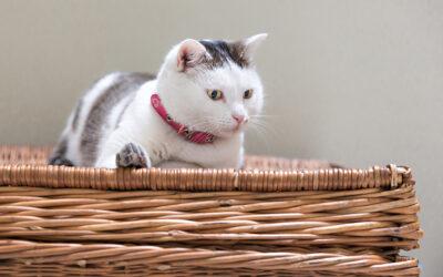 Campanya esterilització de gats