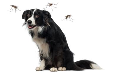 Protegeix la teva mascota de la leishmaniosi